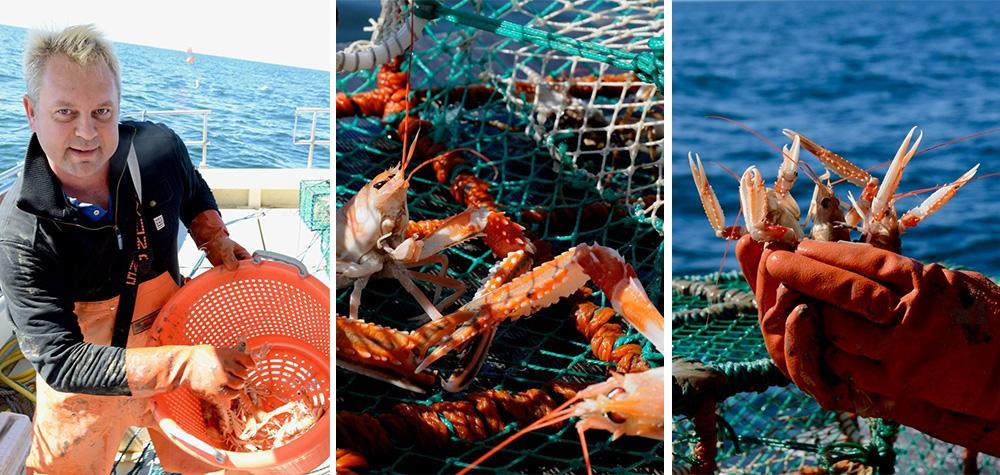 Kräftsafari i Göteborg - fiska kräftor med guide (från 6 personer)