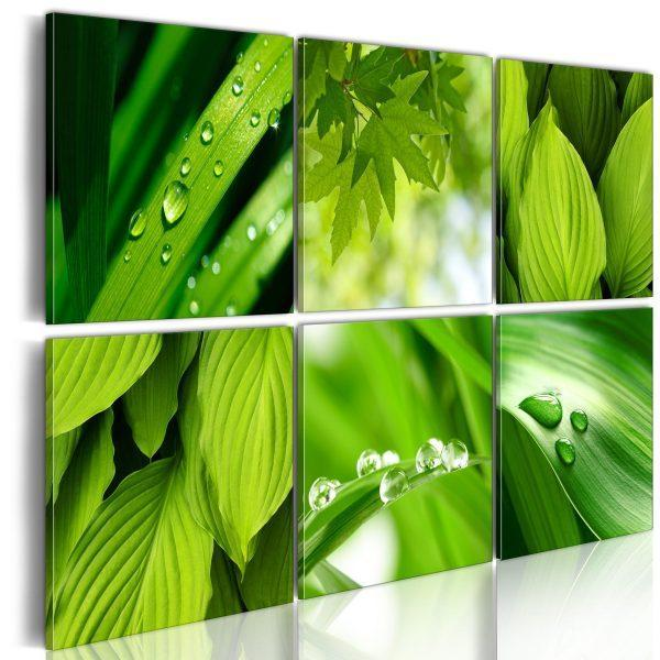 Canvas Tavla - Fresh green leaves - 120x80