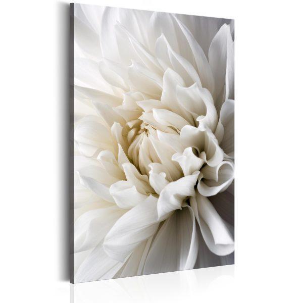 Canvas Tavla - White Dahlia - 80x120